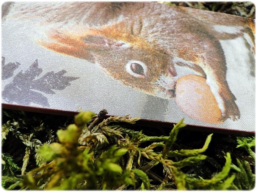 Zakładka do książki Lisek i wiewiórka 5
